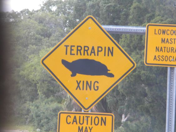 Terrapin Crossing.