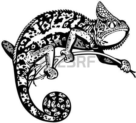 Terrarium animals clipart #5