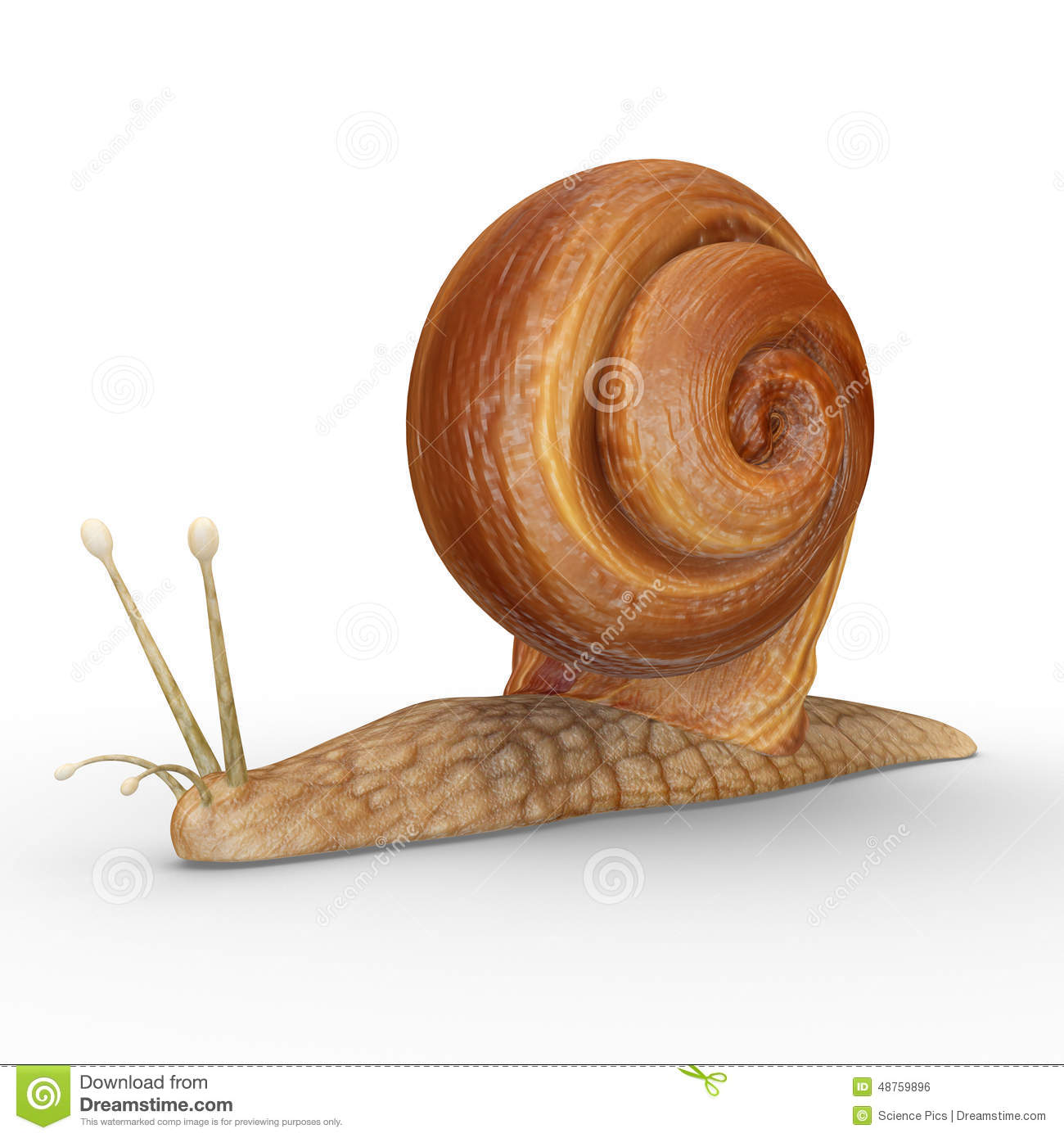 Helix (Snail) Stock Illustration.