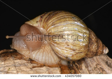 Land Gastropod Stock Photos, Royalty.