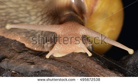 Malacology Stock Photos, Royalty.