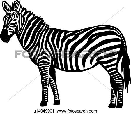 Clipart of Zebra u14049901.