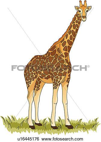 Clip Art of wild animal, vertebrate, giraffe, land animal, mammal.