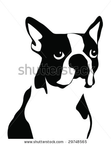 Boston terrier clipart.