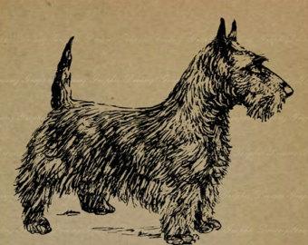Clipart terrier.