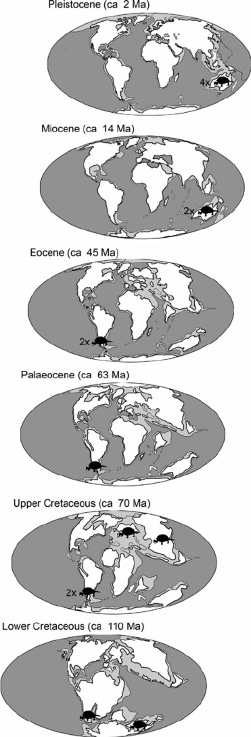 New evidence from the Paleocene of Patagonia (Argentina) on the.