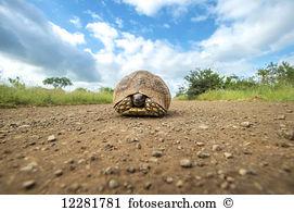 Testudinidae Stock Photo Images. 425 testudinidae royalty free.
