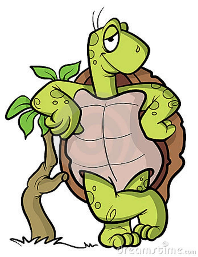 1000+ images about Tortugas on Pinterest.