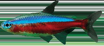 Tetra Fish—Neon Tetra Fish Tanks, Food #595142.