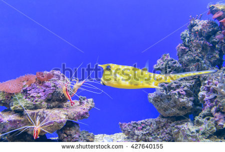 Tetraodontiformes Stock Photos, Royalty.