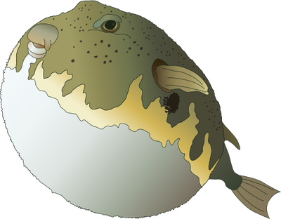Sphoeroides maculatus (Nothern Puffer).