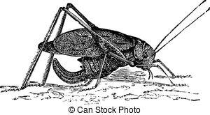 Tettigoniidae Clip Art Vector Graphics. 4 Tettigoniidae EPS.