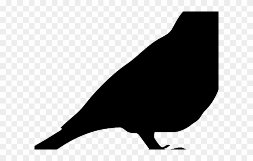 Mockingbird Clipart Robin.