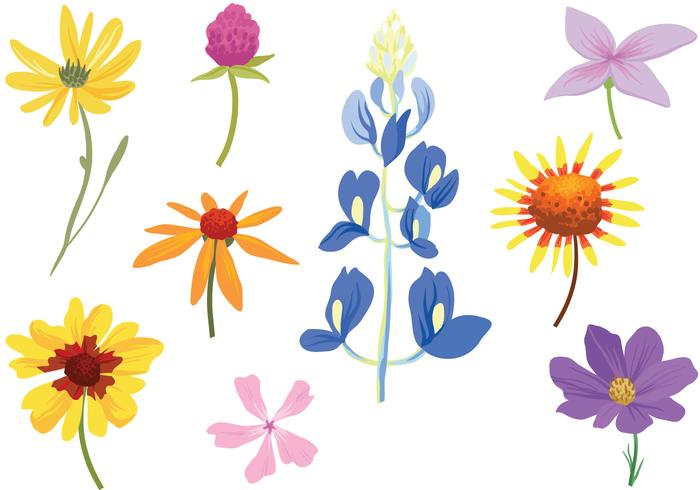 Free Colorful Wildflower Vectors.
