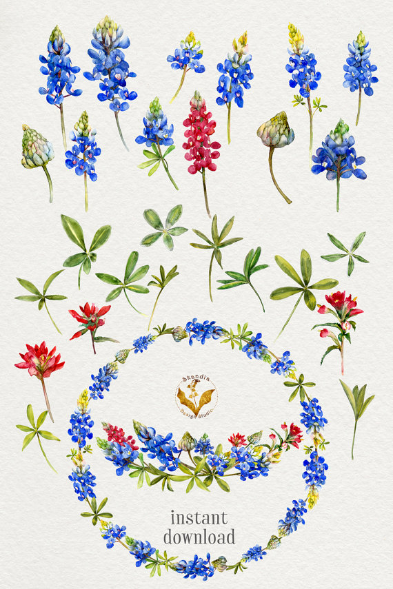 Watercolor flowers bluebonnet clipart by SkandiaDesignStudio.