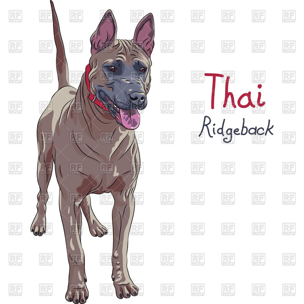 Thai Ridgeback Dog in standing Vector Image #67778.