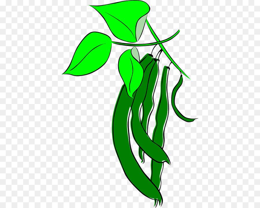 Legumes Clip art Coffee bean.