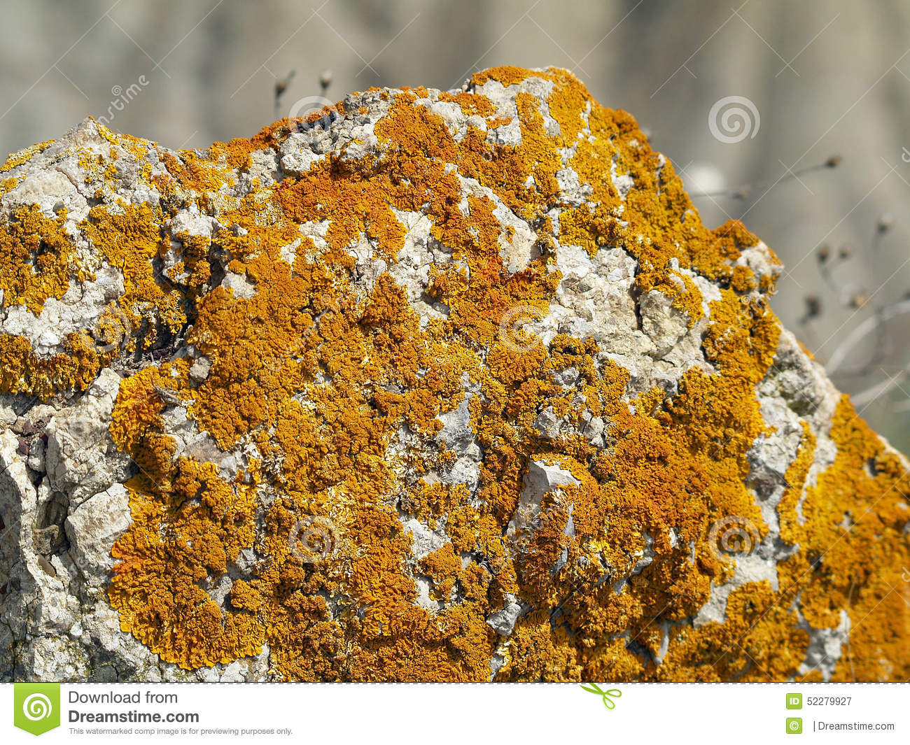 Thallophyta Stock Photos, Images, & Pictures.