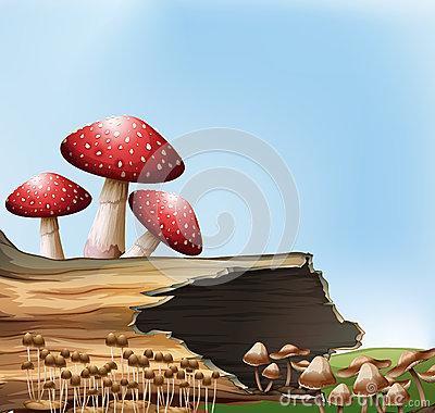 Thallus Stock Illustrations.