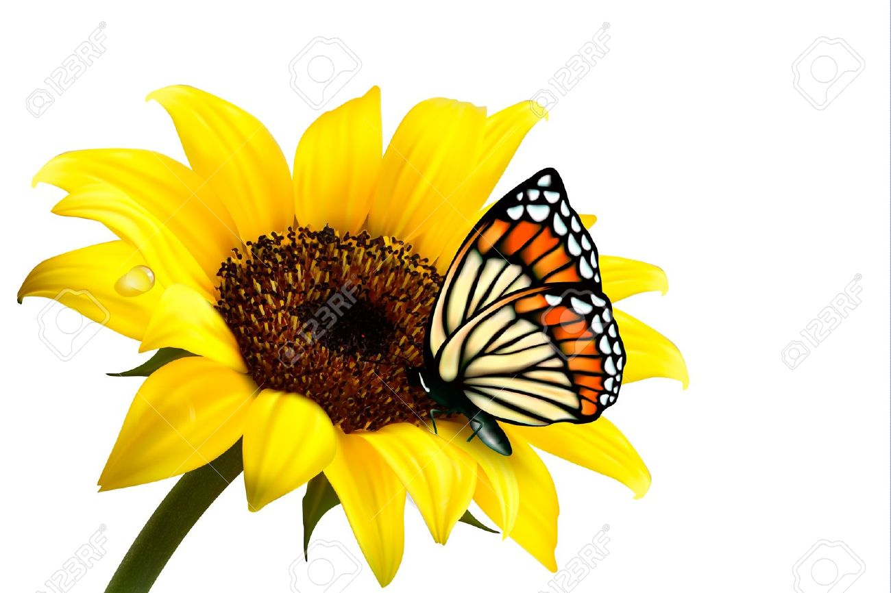 thank you clipart sunflower butterfly 20 free Cliparts ...