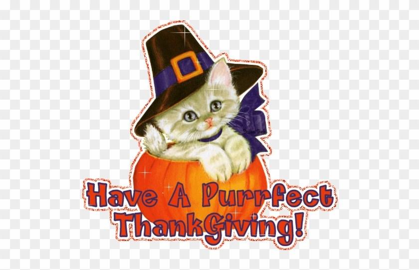 Thanksgiving cat clipart 1 » Clipart Portal.