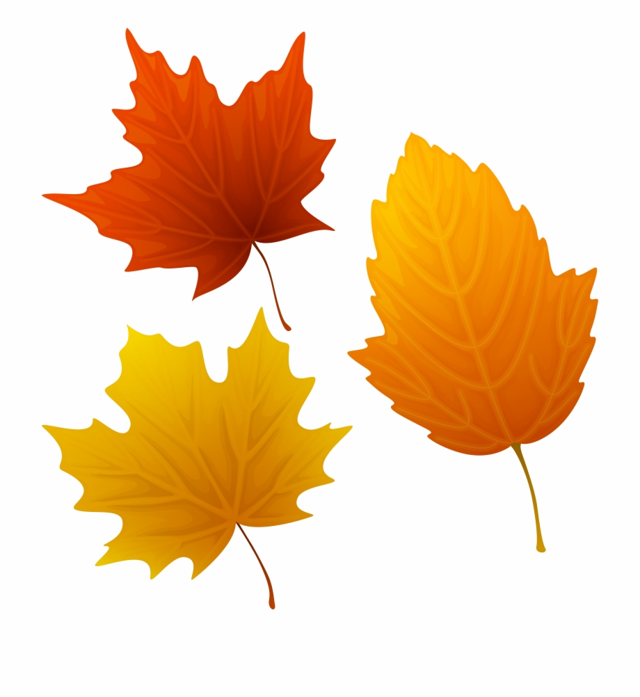 Leaves clipart thanksgiving, Leaves thanksgiving Transparent.