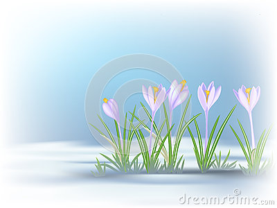 Wildflower Patch Stock Illustrations, Vectors, & Clipart.