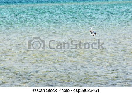 Stock Image of seagul divning into the baltic sea for fishing.