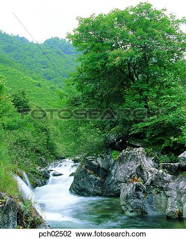 Stock Photo of valley, canyon, brook, rivulet, bank of a stream.