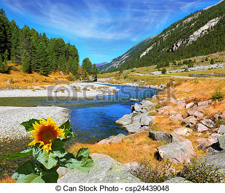 Stock Photo of On the bank of the stream grows sunflower.