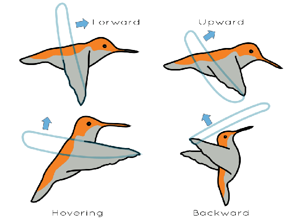 How does flapping a wing create thrust?.