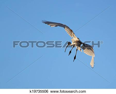 Stock Images of Look out below k19735506.