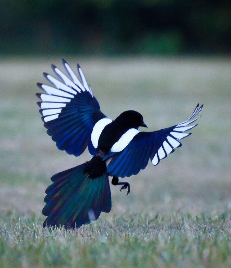 1000+ ideas about Bird Wings on Pinterest.