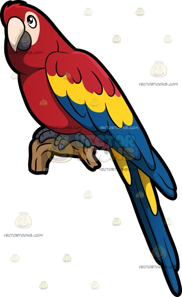 A Parrot : A bird with red yellow and blue feathers cream colored.