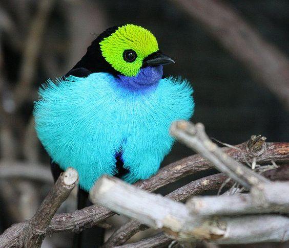 fluffy #bird #blue # moment love.
