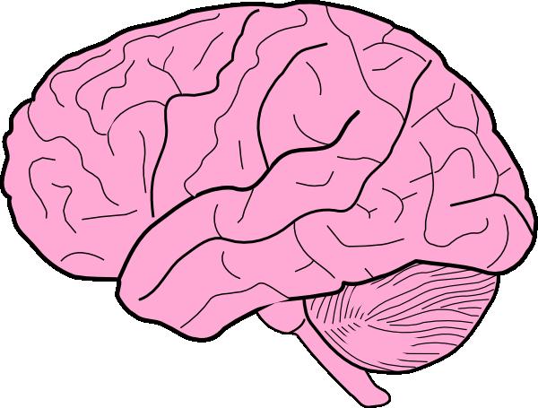 Free Brain Cliparts, Download Free Clip Art, Free Clip Art.