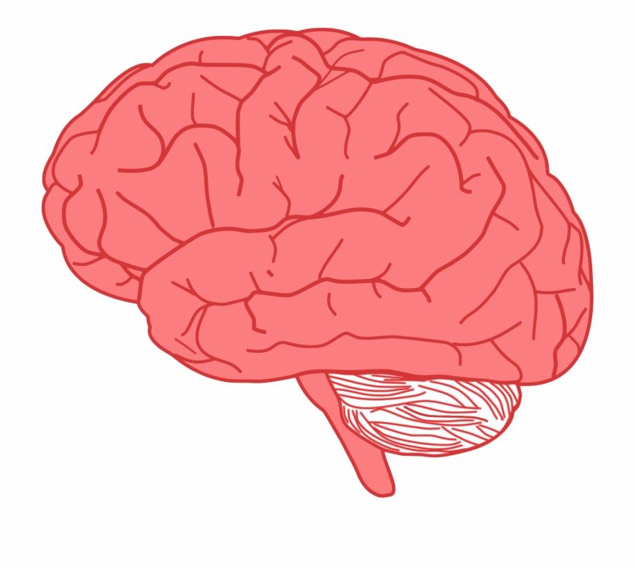 Brain Profile Optimized Big Image Png Ⓒ.