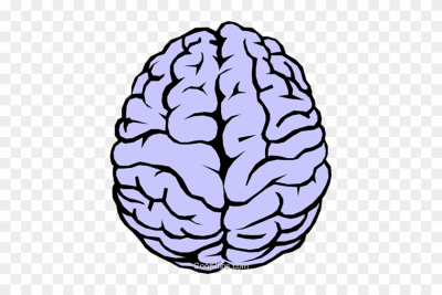 Download Free png Download Free png Human Brain Clipart.