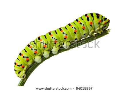 Caterpillar To Butterfly Stock Photos, Royalty.