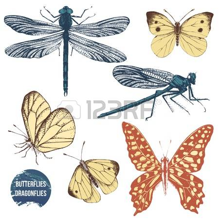 121 Cabbage White Butterfly Stock Vector Illustration And Royalty.
