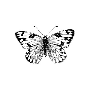 Female Cabbage Butterfly Clipart.