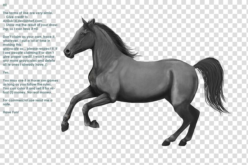 Canter, horse illustration transparent background PNG.