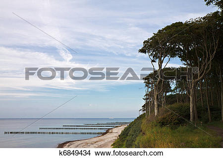 Stock Photo of Coastal Forest on shore of the Baltic Sea in.