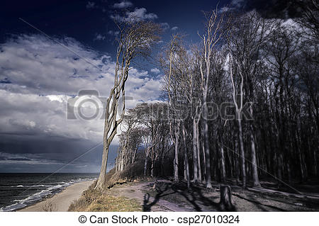 Stock Photo of Ghost forest on the Baltic Sea.