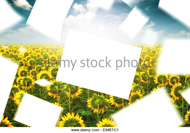 Fly Papers Stock Photos & Fly Papers Stock Images.