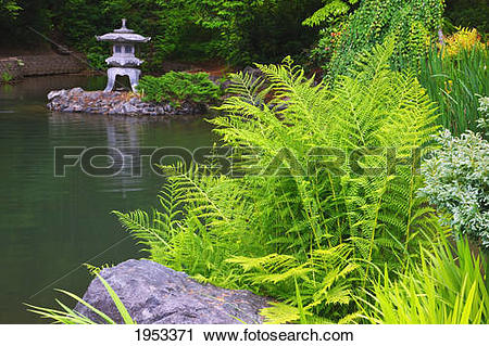 Stock Photography of plants growing on the edge of a pond in.