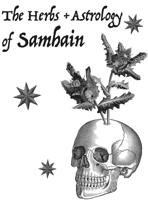 worts + cunning apothecary — The Herbs + Astrology of Samhain.