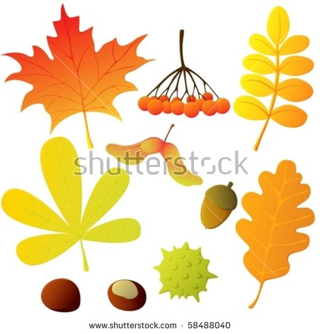 Maple Seed Stock Photos, Royalty.