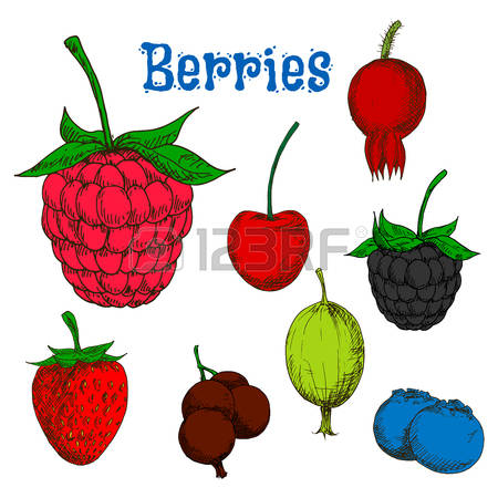 3,934 Red Raspberry Stock Vector Illustration And Royalty Free Red.