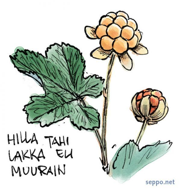 1000+ images about Natural Science/Art/Berries on Pinterest.